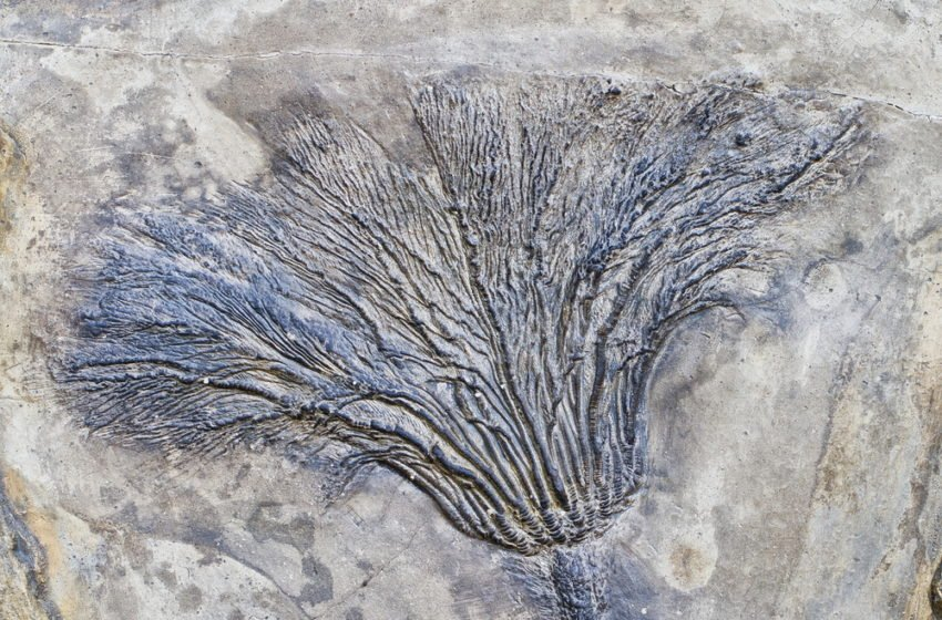 Origin of the world's oldest fossil trees