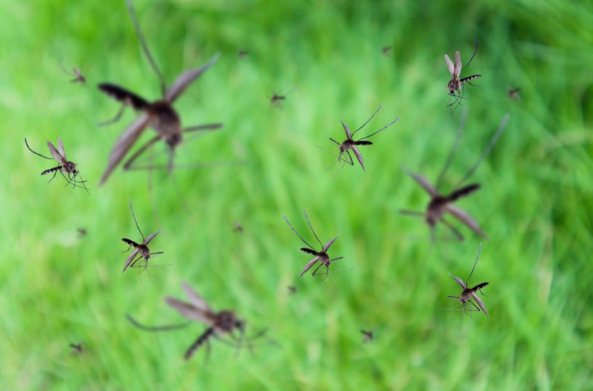Let's imagine a world without mosquitoes