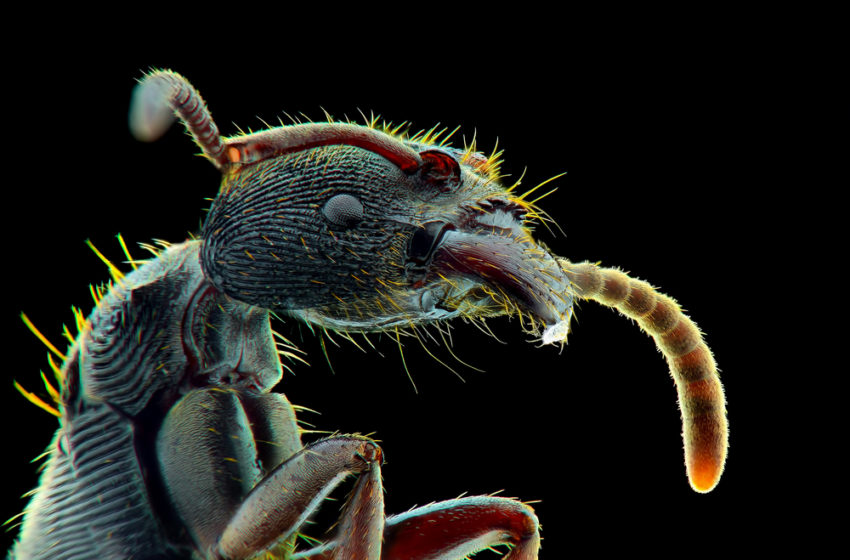 These are the winners of the Nikon Small World Photomicrography Competition