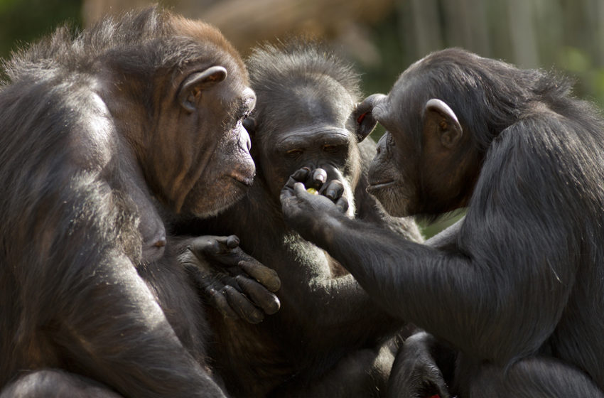 5 Animal behaviors that science is not able to explain