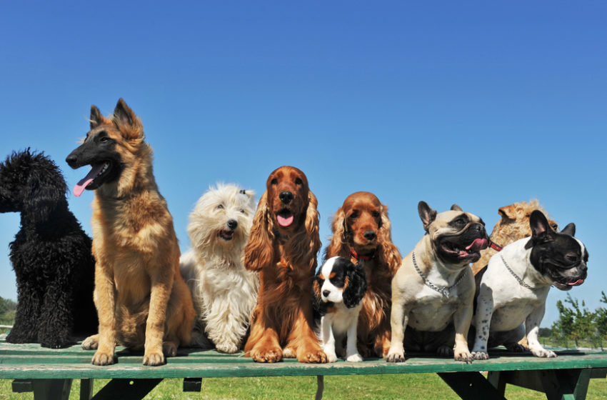 What is the global population of dogs?